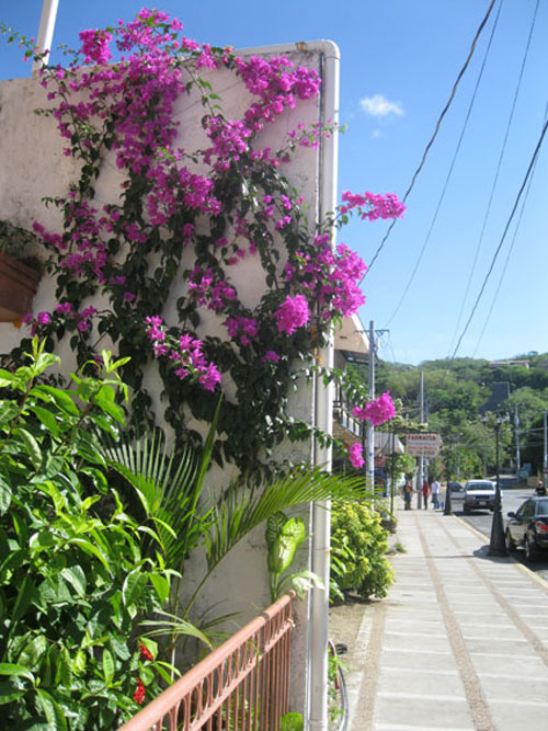 Tropical blooms on a typical San Juan del Sur street.