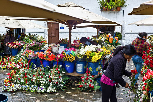 Cuenca's markets showcase the brightly colored flowers available to purchase.