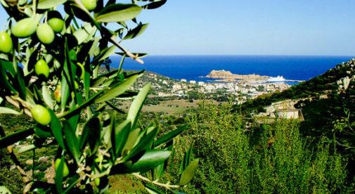 corsica-olives