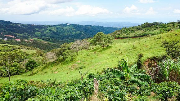 Finding an Instant Community of Friends in Costa Rica