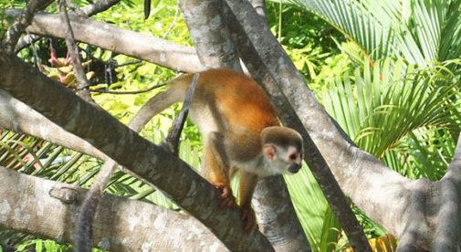 Monkey Road, Costa Rica