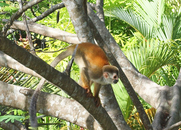 Traveling the Monkey Road in Costa Rica