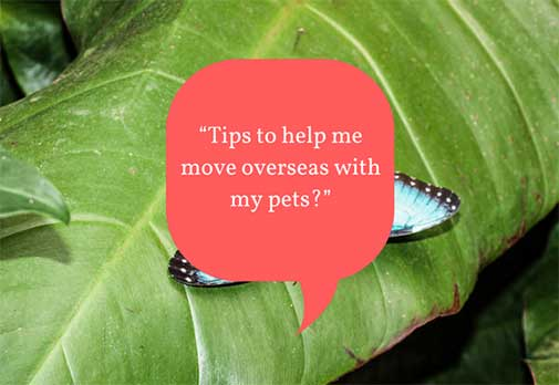 Tips to help me move overseas with my pets?