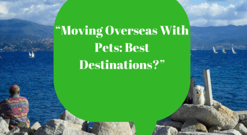 Moving overseas with pets best destinations