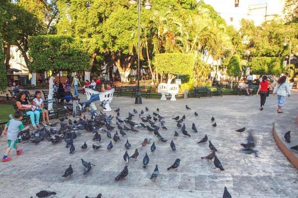 Mérida Colonial City-Living