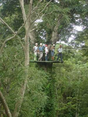Experience Nicaragua From the Treetops With Ziplining in Mombocho