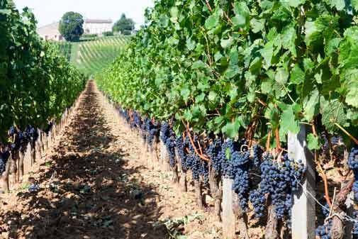 Bordeaux Wine Marathon, Elves in Ecuador, and More