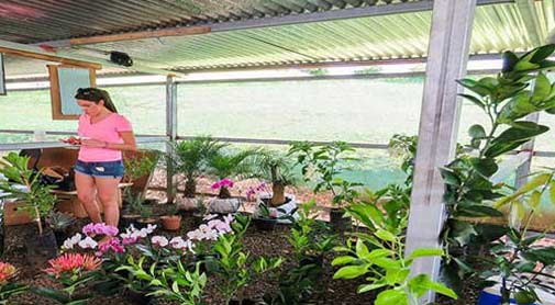 Natural Beauty in the Gardener's Paradise of Costa Rica