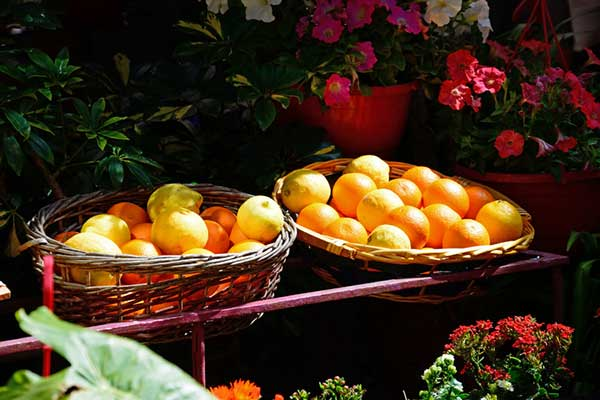 Citrus Festival Malta