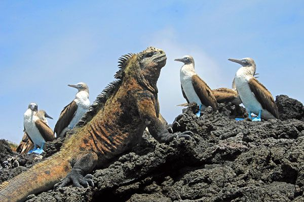 What are the Galápagos Islands Famous for?