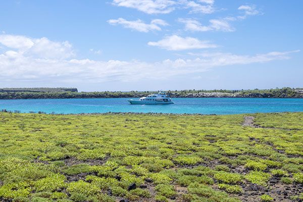 Are there Cruises to the Galápagos Islands?