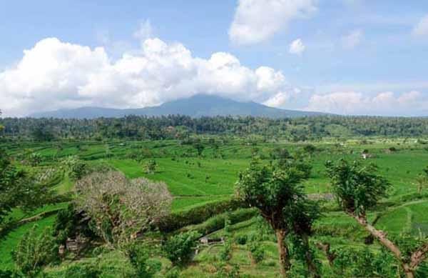 sanur fields