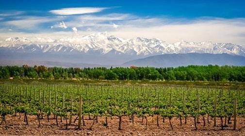 A Rent-Free Summer in Mendoza, Argentina