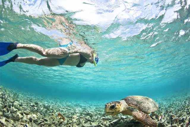 snorkling in caye caulker