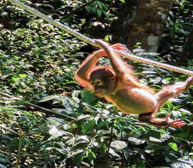 best time to visit malaysia orang-utan