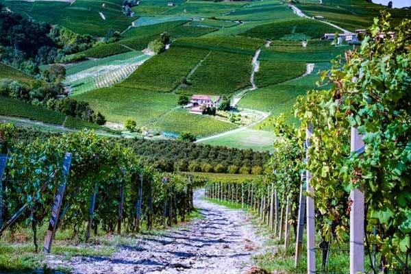 Sample Barbera and Barolo wines at their origin