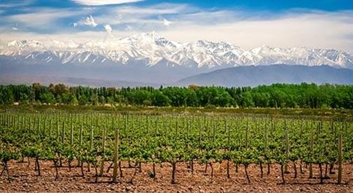 Taking a Tour of Mendoza's High-Altitude Bodegas