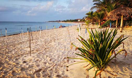 A Caribbean Paradise for Nature Lovers