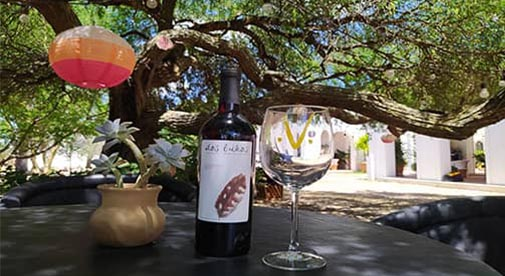 Mexico's Underrated Wine Region You Need to Know About