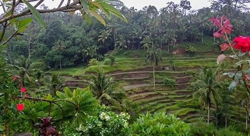 13 Reasons to Choose Ubud, Bali For Your Retirement