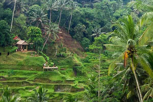 Nature-in-Ubud