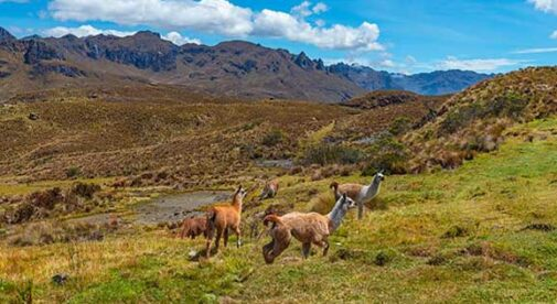 An Expat's Guide to Cajas National Park