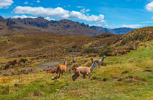 Exploring Cuenca's Backyard: An Expat's Guide to Cajas National Park